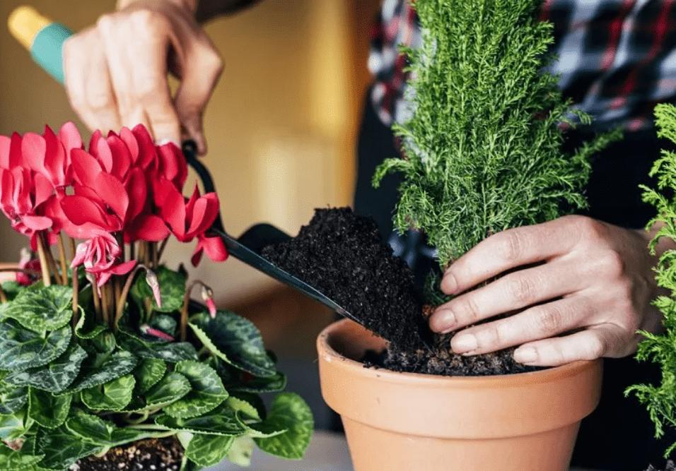 Лунный календарь пересадки комнатных растений на октябрь 2021 года
